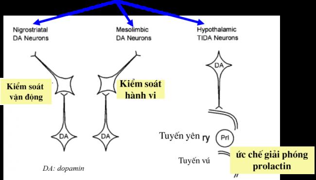 Các cơ chế hoạt động của thành phần quả Vitex 1