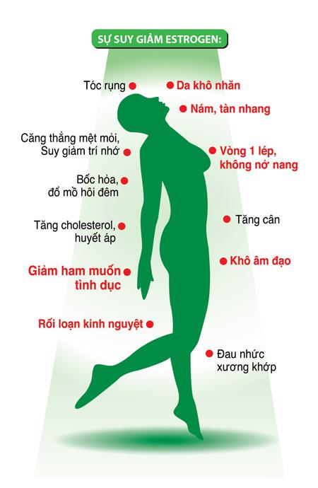 Vai trò của nội tiết tố nữ Estrogen 1