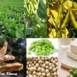 Đậu nành và các tác dụng của đậu nành