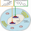 Sử dụng isoflavone – Tinh chất đậu nành đúng cách